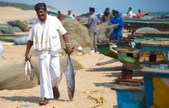 Indian man walking along the shore holding fish.